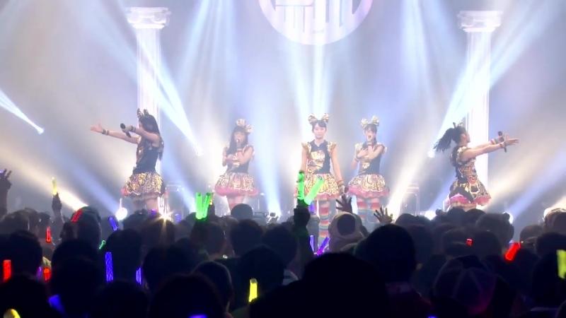 Team Syachihoko - START