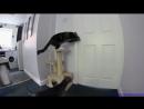 ДРУЖБА это ЧУДО, смешные и прикольные видео про дружбу животных