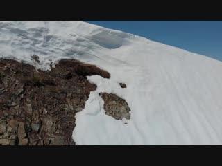 Fallen bear cub climbs back to mama__ viralhog