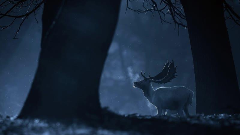 30. Ночь в его лесу