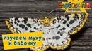 Изучаем муху и бабочку 🦋 Игротека с Барбоскиными 🦋 Новая серия