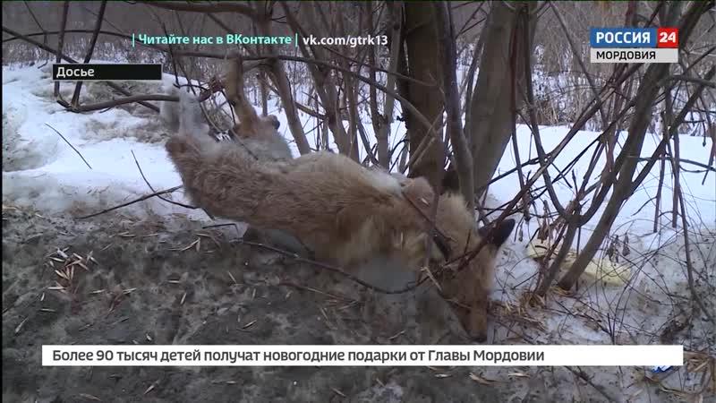 В 2 районах Мордовии ввели карантин из за обнаруженного вируса бешенства
