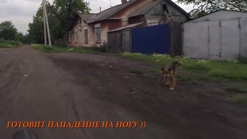 Перцовый баллончик против Собак - 7. Перец. г.Омск Город глазами велосипедиста 189