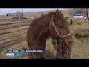 Причина массовой гибели лошадей по-прежнему не названа.16.05.2019