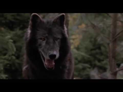 Вот это да. Собака спасла жизнь котят от волка.