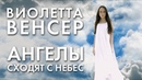 Виолетта Венсер - Ангелы сходят с Небес