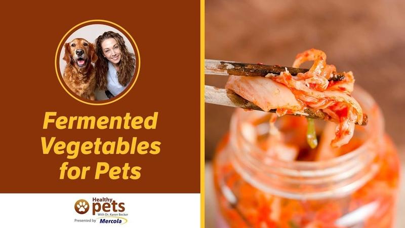 Ферментированные овощи для домашних животных / Fermented Vegetables for Pets