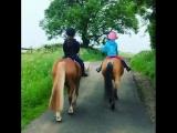 прогулки на пони