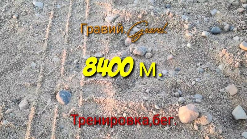 Американский бульдогТренировка,бег по гравию,American Bulldog Training, gravel run, 8,400 meters