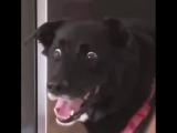Что думает чёрный пёс?