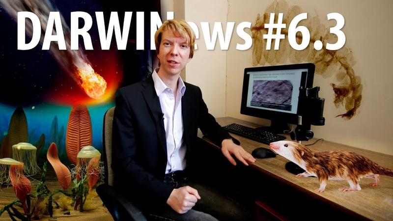 DARWINews 6.3: первые эксперименты эволюции, невиновный метеорит, мимикрия привиденьевых