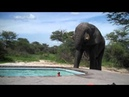 Слон пришел попить воды