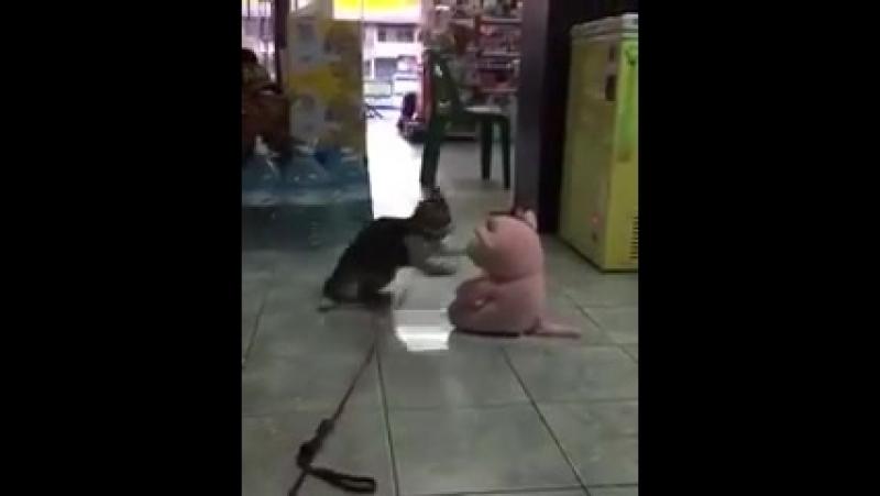 Котэ напал на розового плюша