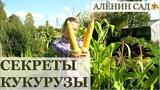 КУКУРУЗА все секреты выращивания! Как выращивать кукурузу