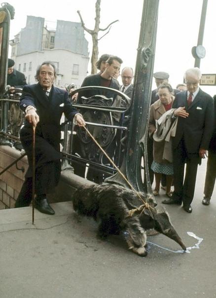 Сальвадор Дали выгуливает своего питомца муравьеда. Париж , 1969 год