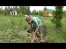 Содержание собаки в Родовом Поместье