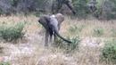 Игривый слоненок