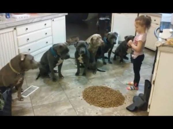 Вот, что произошло, когда 4-летнюю девочку оставили с 6 питбулями