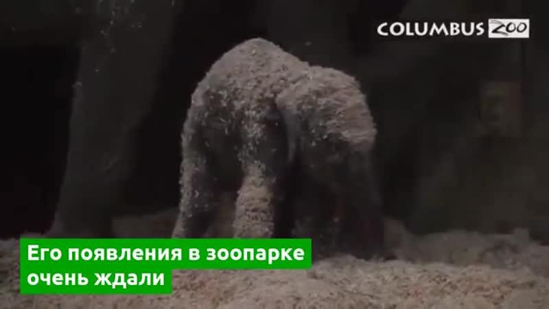 В зоопарке Колумбуса родился слоненок