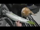 Кошки и лист алоэ вера