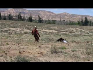 Момент нападения беркута на восьмилетнюю девочку попал на видео