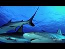 Сокровище Купера (сезон 2, серия 5) - Окружённый акулами.