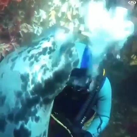 Подводные обнимашки