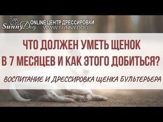 Что должен уметь щенок в 7 месяцев и как этого добиться? Воспитание и дрессировка щенка бультерьера