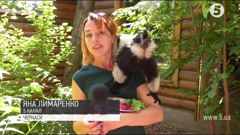 Тварин годують морозивом у черкаському зоопарку