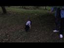 Клепа на прогулке( осваивается)