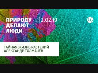 Тайная жизнь растений c Александром Толмачевым