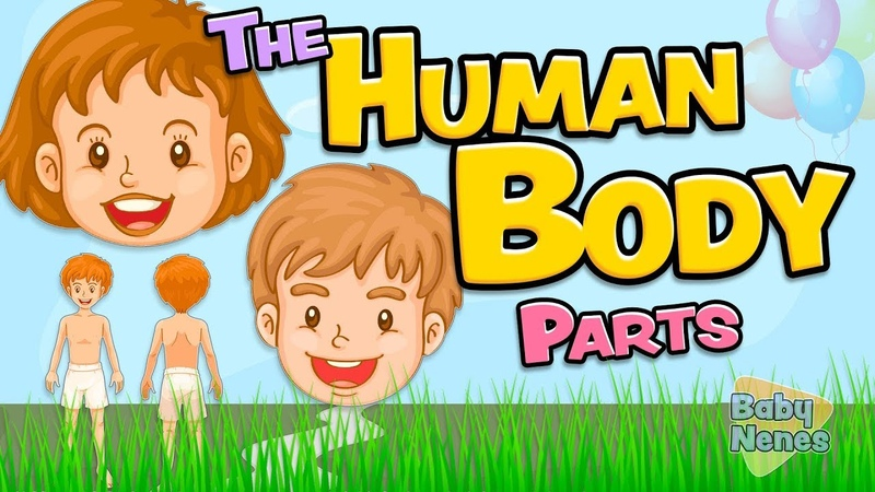The human body parts in English for kids - Anatomy vocabulary