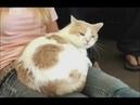 Моя адская кошка Стелла
