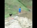 O ataque das galinhas