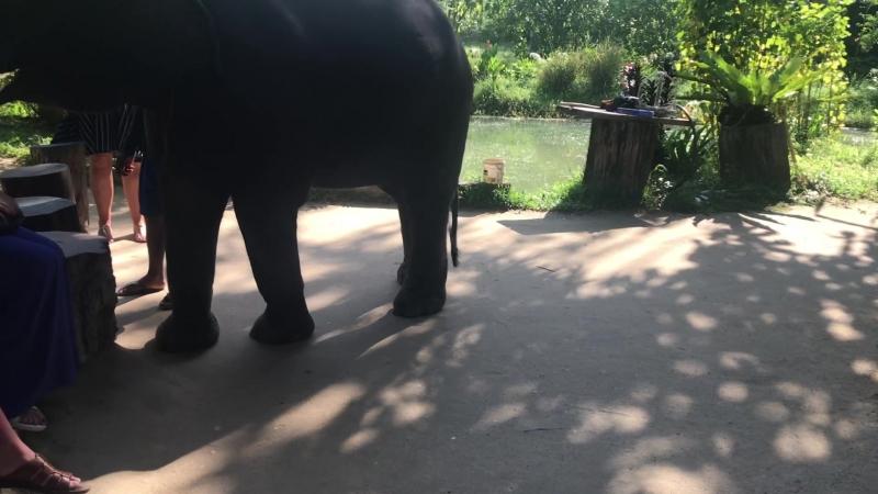 Thailand - khao lak Шоу Слонёнка
