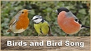 Birds : Bird Sounds and Bird Sounds : Vogelklänge 鳥、鳥の音