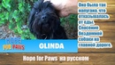 Спасение бездомной собаки на главной дороге Hope for Paws на русском Frozen in fear