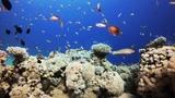 4K Coral Reef Aquarium ~ Relaxing Music for Sleep, Study, Meditation &amp Yoga Screensaver 3 HOURS