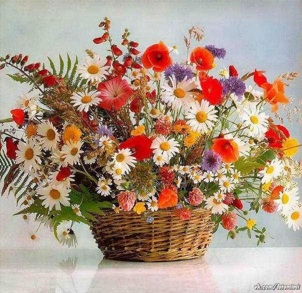 Цветы - это кусочек природы, окружающего нас мира, цветы - это радость, цветы - это повод улыбнуться, повод задуматься о прекрасном.