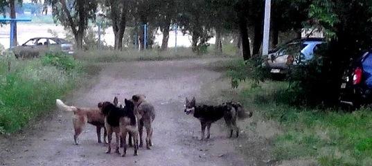 Усть-Илимску выделено больше средств на отлов и содержание безнадзорных животных