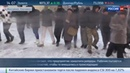 Новости на Россия 24 • В Житомире молодчики в масках захватили кондитерскую фабрику