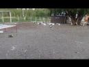 Mat Goose - live