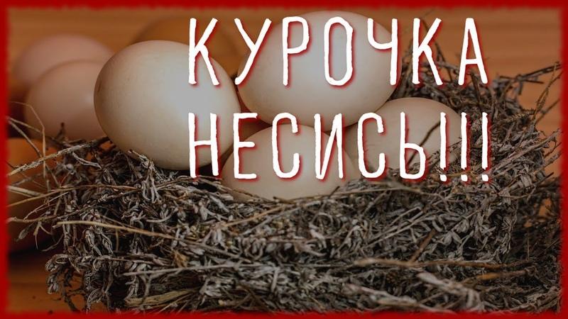 2 10 СОВЕТОВ ЧТОБЫ КУРЫ НЕСЛИСЬ ЗИМОЙ КАК ЛЕТОМ Чем кормить кур чтобы хорошо неслись
