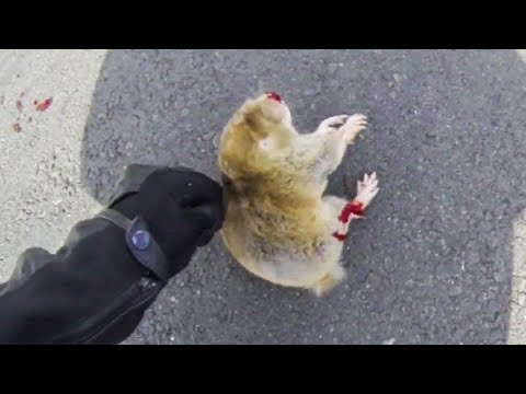 BIKER TRYING TO HELP DYING ANIMAL   BIKERS ARE NICE   RANDOM ACTS OF KIDNESS   [Ep. 36]