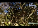 научно-популярный проект Еда живая и мертвая [15/09/2018.всё о съедобных цветах.оливки и маслины растворимый кофе опасен