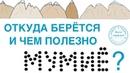 Выпуск 28. О.Д. Барнаулов о мумиё