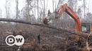 Orangutan buldozere meydan okudu - DW Türkçe