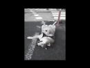 R.i.p (VHS Video)