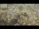 Cavallucci marini a Taranto