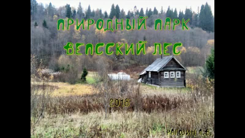 Вепсский лес 2018